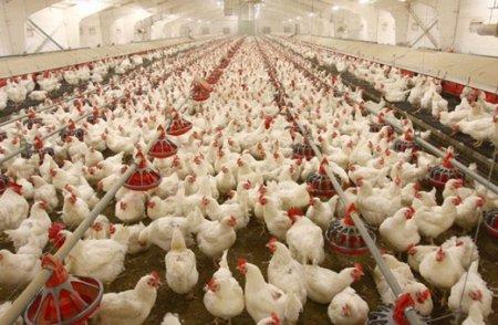 تولید بیش از 16 هزار تن تخممرغ خوراكي در سال 1396 در استان گلستان