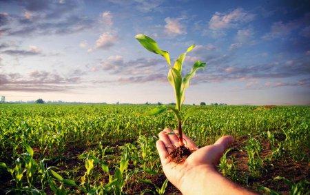 چکیده نتایج طرح آمارگیری زراعت استان گلستان در سال زراعی 96-97